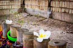 PPB_7186 (PeSoPhoto) Tags: rouge nikon asia cambodia khmer killing pot xp fields ek dictator phnom massgraves penh pol dictatorship khmerrouge polpot 2016 massgrave atrocity choengek choeng d7100