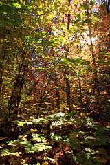 Harding Springs 15 041 (JonM26) Tags: autumn arizona usa tree fall leaves maple sedona foliage hardingsprings