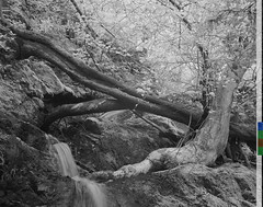 Laying Trees by the Waterfalls (citizenlouie) Tags: california park trees blackandwhite bw postprocessed tree northerncalifornia landscape waterfall spring unitedstates tripod sanjose olympus falls waterfalls infrared cropped sanjos uvascanyon treetrunks 2016 countypark 11x14 photostacking blackrockfalls 750nm extendeddepthoffield adobecs5 adobephotoshopcs5 olympusviewer omdem10