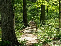 Path between the trees (pilechko) Tags: trees light color green nature outdoors shadows pennsylvania newhope dappled bowmanshill