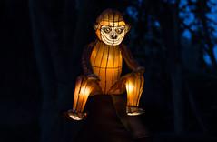 _DSC9541_2 (Elii D.) Tags: light fish flower animal night zoo monkey neon dragons lantern lampion dargon