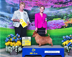 Lydia and Group 3 Mrs Ravenna Kennel Club May 14, 2016 in Ohio Jake handled by Lydia wins a nice Group 3 under Judge Mrs