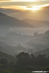 Misty Morning (2121studio) Tags: nature nikon ali malaysia indah cameronhighlands kuantan alam malaysianphotographer drali bohtea sgpalasteaplantation 2121studio kuantanphotographer pahangphotographer ciptaanallahswt 0139342121 nubleebinshamsubahar