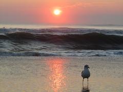 Morning Gull (v seger) Tags: sky sunrise north northcarolina carolina outer outerbanks banks