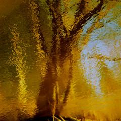April In Reflection...!!! (Denis Collette...!!!) Tags: canada reflection tree river spring rivire reflet arbre printemps provincedequbec portneuf wildriver deniscollette pontrouge riviresauvage img0939jpg rivireauxpommes comtdeportneuf villedepontrouge