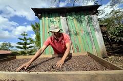 NP Nicaragua CUP 12 (CIAT International Center for Tropical Agriculture) Tags: food cup latinamerica coffee cafe drought nicaragua agriculture tor climatechange adaptation staple globalwarming centralamerica arabica ciat dapa cgiar nrpciat1