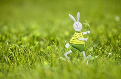 Easter Bunny is Coming - Happy Easter Everyone (Magdalen Green Photography) Tags: pretty dof f14 85mm depthoffield greengrass happyeaster eastertime 2153 happyeastereveryone iaingordon magdalengreenphotography easterbunnyiscoming