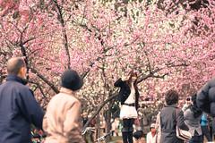 momo (TKYOKMT) Tags: pink flower tree japan spring kyoto peach  nikkor f25 ai 105mm   gosyo  nex7