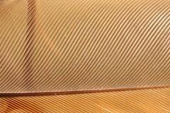 ¯\_(ツ)_/¯ (iofdi) Tags: weekly782012 detail sheer transparent feather