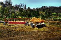 Hay rsfw INDY0231 (IndyMcDuff (Bellifemine Studios)) Tags: landscapes farm farming hay farmimplements newjerseyusa augustanjusa