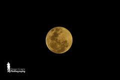 Supermoon as seen from Borneo (Ringgo Gomez) Tags: 1001nights awesomeshot greatphotographers nikkor80200mm kenkopro300 flickraward flickrdiamond malaysianphotographers unforgettablepictures concordians elitephotography nikond700 batterthangood sarawakborneo worldwidenature wonderfulworldofmacro 1001nightsmagiccity flickraward5 mygearandmepremium goldengoldawaward