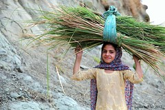 Load of Life (Agha Asif Ali) Tags: travel pakistan mountains girl smile grass yellow daylight child ali kashmir bushes asif childlabor agha rurallife