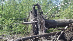 Folded over (Dave Garvin) Tags: trip river canoe damage tornado huron