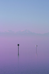 Lilabodensee (blutdoping) Tags: purple lila bodensee