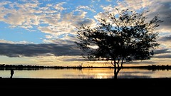 Cherry Lake tree (Dale Gillard) Tags: blue sunset sky tree silhouette melbourne victoria altona angler cherrylake