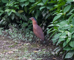 IMG_3352 (jaglazier) Tags: plants birds animals june gardens cities taiwan parks taipei daanforestpark bushes urbanism 2012 daan unidentified 6112 unidentifiedspecies copyright2012jamesaglazier