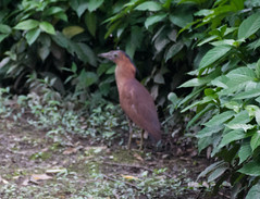 IMG_3353 (jaglazier) Tags: plants birds animals june gardens cities taiwan parks taipei daanforestpark bushes urbanism 2012 daan unidentified 6112 unidentifiedspecies copyright2012jamesaglazier