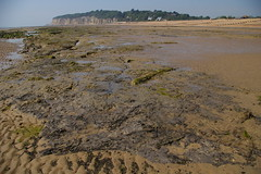 submerged forest beach (debs-eye) Tags: beach lowtide pettlevel submergedforest drownedtrees