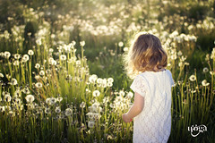 Dandelion meadow (Uoga Photography) Tags: light summer sun white flower green nature colors girl childhood canon kid colours child dress lace meadow curls dandelion canon60d uogaphotography