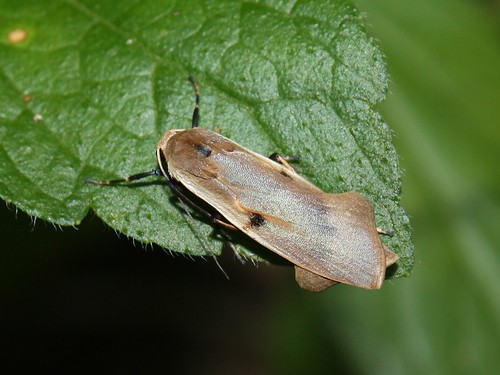 Moth 0727