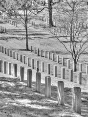 A Visitation (Cocoabiscuit) Tags: cemetery arlington ir military infrared arlingtonnationalcemetery d300 cocoabiscuit 18105mm