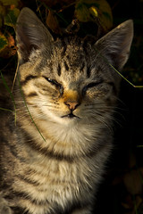 IMG_5821 (Lightcatcher66) Tags: florafauna makros katzencats lightcatcher66