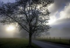 Sunrise Service (Tony Barber --The Jolly Swagman) Tags: road morning mist fog rural sunrise early nationalpark loop dogwood greatsmokymountains cadescove gsmnp