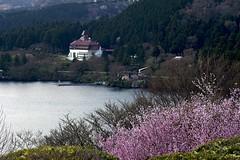 YAMANO HOTEL (tez-guitar) Tags: mountain lake flower macro water cherry spring pentax blossoms cherryblossom sakura tamron pentaxart