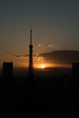 ILCA-77M2 DSC03702.jpg (san-ue) Tags: tokyo tokyotower     ilca77m2 77ii