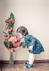Little girl with flowers (AdamTasImages) Tags: flowers baby cute girl happy nikon photographer photoshoot princess sweet candid joy images babygirl slovakia lovely oneyearold dx happines babyphoto barbora snina lucenec adamtas shawphoto adamtasimages picworth1000words