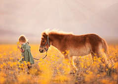 Summer Light (Portraits by Suzy) Tags: family las vegas flowers light portrait horse usa pets nature girl childhood animals by rural portraits canon children fur death toddler warm photographer child natural action farm candid country mini super suzy valley bloom mead yelllow 6d