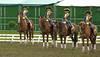 Garde républicaine (danieleclubfoto) Tags: chevaux équitation garderépublicaine