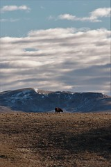 SART032616 (RhinoSkin) Tags: sky foothills landscape cow pasture range