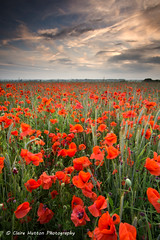 (Claire Hutton) Tags: county uk blue sunset red portrait colour green field clouds rural landscape countryside farm farming wideangle dorset poppy poppies leefilters ndgrads sonya6000 samyang12mm
