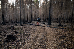 Distortland (Villem Voormansik) Tags: road trees people man black forest track grim path dry foliage fir lonely forestfire barren spruce