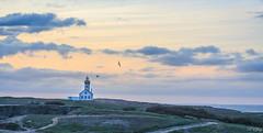 Les poulains (f.ray35) Tags: sun sunlight france de landscape soleil bretagne vol paysage morbihan phare oiseaux couch britany belleile