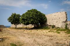 Vakantie Kroati & Sloveni 2015 (redijkstra) Tags: vakantie boom muur cres kroati vervallen osor