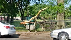 Tree Limb Down in Fuller Park #2 (artistmac) Tags: park street chicago tree fence illinois outdoor wroughtiron il repair fallen southside bent limb fuller fullerpark michaelbrown superintendent workorder blowndown hispark lethimactlikeitforachange