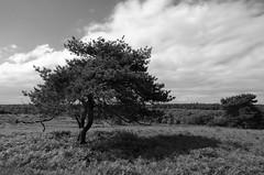 Sutton Park (baloo2) Tags: cycling blackwhite suttonpark nikond7000 allrightsreservedrobcorbett tamron16300mmf3563diiivcpzd