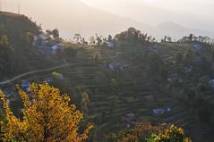 Terraces (Mel@photo break) Tags: morning nepal house plant tree nature field rural countryside stair terrace hill mel layers melinda pokhara sarangkot  chanmelmel melindachan