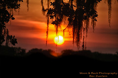 Romance Beckons (Aspenbreeze) Tags: sunset sun night moss twilight texas sundown bayou swamp spanishmoss marsh msm settingsun thegalaxy aspenbreeze danglingmoss mossintree topphotospots tpslandscapes gpsetest