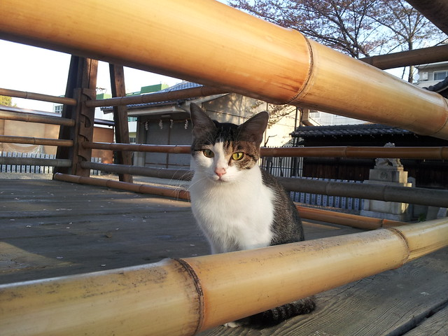 Today's Cat@2012-04-19