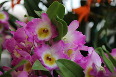Orchids (fotovision47) Tags: friends red white green leaves yellow hawaii dof orchids bokeh lilac soe thegalaxy img1378 artofimages flickraward sapphireawards mygearandme poppyawards redgroupno1 yellowgroupno2 fotovision47 thelooklevel1red