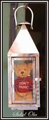 My little Teddy - Don't Panic (97) (Sidsel Oba) Tags: bear red brown cute norway fun toy toys norge photo funny colours foto teddy little fantasy teddybear st rd playful brun bjrn moro tnsberg bamse dontpanic leker leke farger liten gy morsom fantasi sidseloba