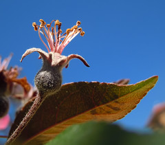 el destino de la flor (R.Duran) Tags: flower closeup nikon flor s6000 ltytr1