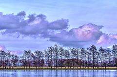 Lined-up trees 2 (Wim Koopman) Tags: blue trees winter lake holland ice water netherlands dutch up clouds reflections season photography frozen photo pond nikon mood stock nederland dramatic blues atmosphere row stockphoto linedup lined stockphotography d90 goudriaan wpk