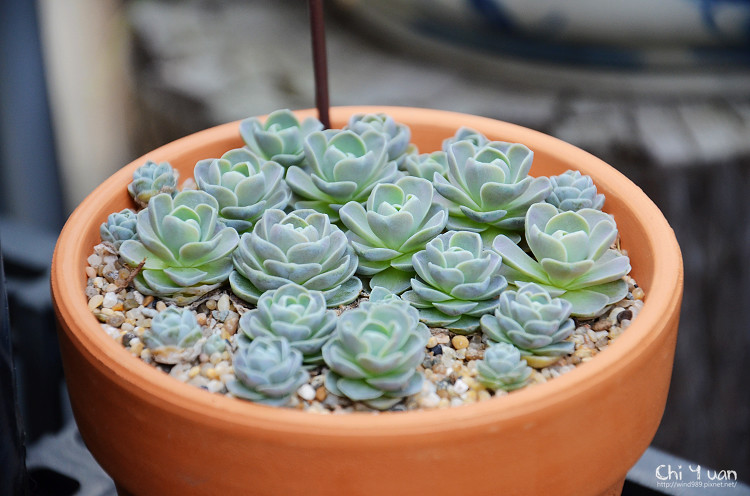 台北花卉村-多肉植物17.jpg