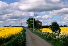 Fields of Gold (moonjazz) Tags: road uk england favorite field yellow rural canon landscape spring country darlington midlands rapeseed byway