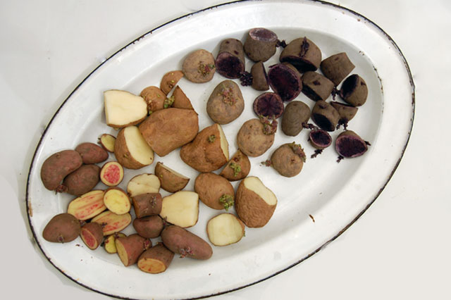 Platter-of-potatoes