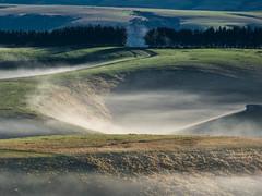 Three Sheep (Ian@NZFlickr) Tags: road autumn mist green misty still sheep very small hills fields even though mahinerangi hellooooooooofromagentmedaco